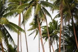 shesurfs.com.au - Mikala Wilbow - lifestyle photographer - fiji girls surf trip - fiji palms