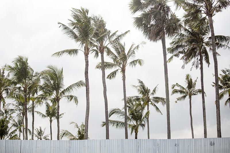 shesurfs.com.au - Mikala Wilbow - surf photography - Bali palms