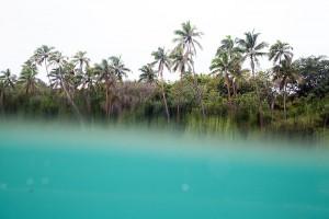 shesurfs.com.au-surf-lifestyle-photography-ocean-palms