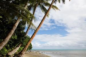 shesurfs.com.au - Mikala Wilbow - surf photographer - Fijian palms