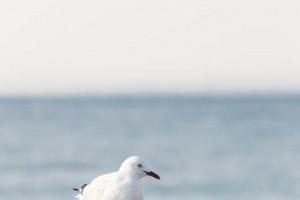 shesurfs.com.au-surf-ocean-art-photography-seagul