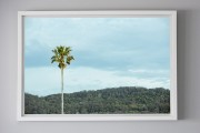 shesurfs.com.au-surf-ocean-art-photography-palm-alone-framed-print