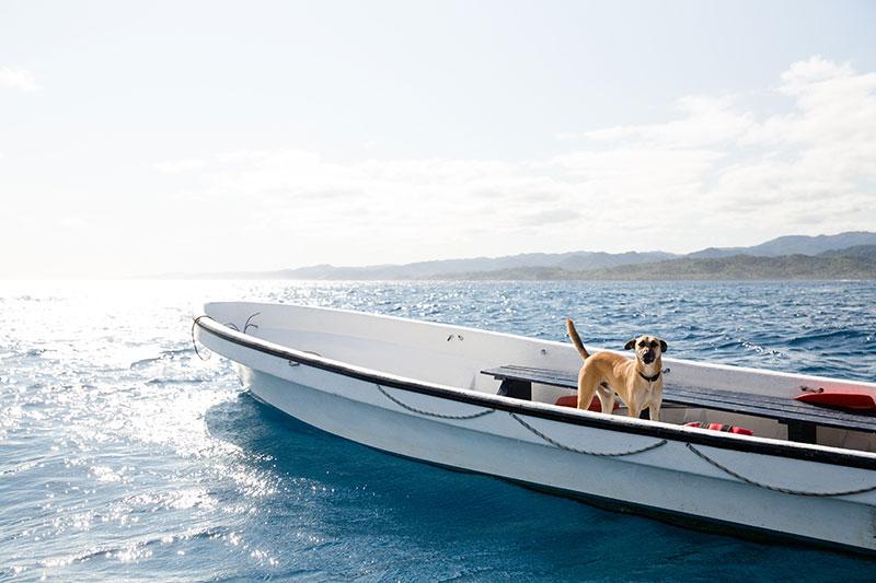shesurfs.com.au - Mikala Wilbow - lifestyle photographer - fiji girls surf trip - Fiji Waidroka dog