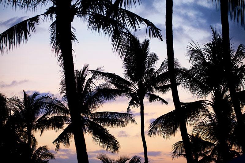 shesurfs.com.au - Mikala Wilbow - surf photography - Palms