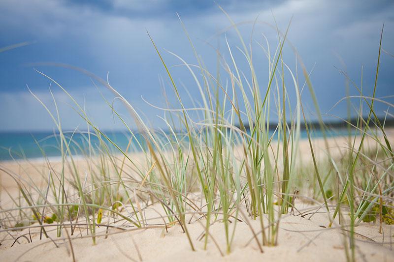 shesurfs.com.au-surf-lifestyle-photography-beachgrass