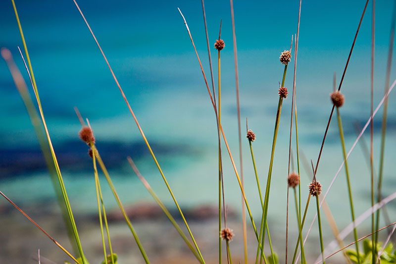 shesurfs.com.au-surf-lifestyle-photography-seagrass